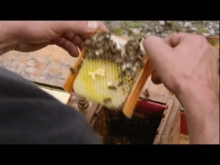 Пчеловодство в Германии 3-3